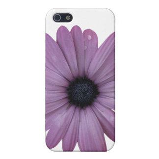 Purple Daisy Like Flower Osteospermum ecklonis Case For iPhone SE/5/5s