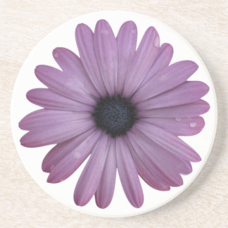 Purple Daisy Like Flower Osteospermum ecklonis Coaster