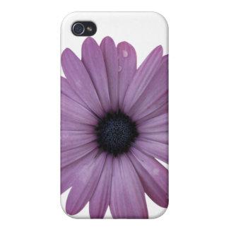 Purple Daisy Like Flower Osteospermum ecklonis iPhone 4/4S Case