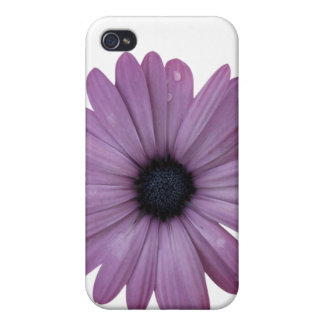 Purple Daisy Like Flower Osteospermum ecklonis iPhone 4 Case