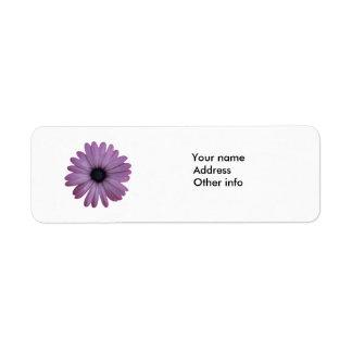 Purple Daisy Like Flower Osteospermum ecklonis Label