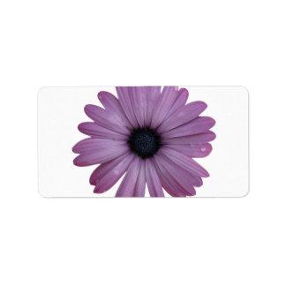 Purple Daisy Like Flower Osteospermum ecklonis Address Label