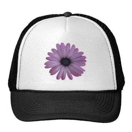 Purple Daisy Like Flower Osteospermum ecklonis Trucker Hat