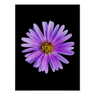 Purple Daisy on Black Customized DaisiesTemplate Poster