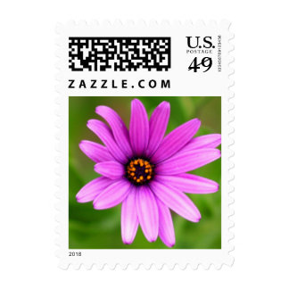 Purple Daisy Postage