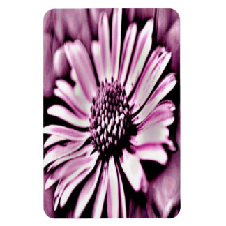 Purple Daisy Rectangular Photo Magnet