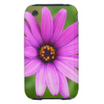 Purple daisy tough iPhone 3 cover