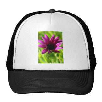 Purple Daisy Trucker Hat