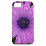 Purple Daisy with Raindrops iPhone 5 Cases