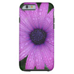 Purple Daisy with Raindrops iPhone 6 Case