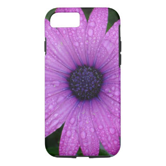 Purple Daisy with Raindrops iPhone 7 Case