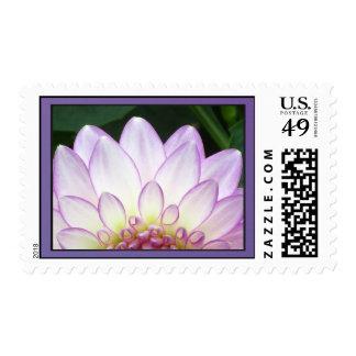 Purple Dalia Flower Postage