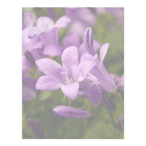 Purple Dalmatian Bellflowers Letterhead