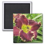 Purple Daylily Magnet