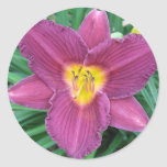 Purple Daylily Sticker