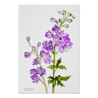 Purple delphinium botanical fine art poster print