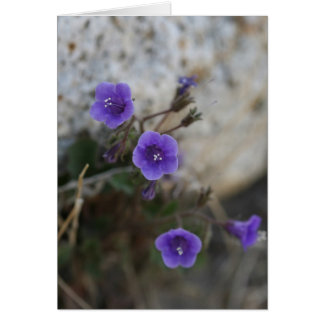 Purple Desert Flowers - Blank Card