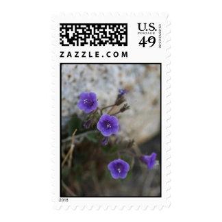 Purple Desert Flowers - Postage Stamp