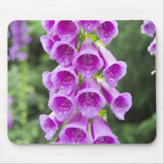 Purple Digitalis Pupurea flower Mouse Pad