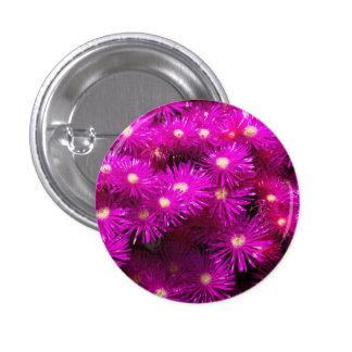 Purple Dome Aster Button