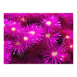 Purple Dome Aster Personalized Announcements
