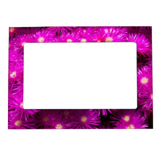 Purple Dome Aster Magnetic Photo Frame
