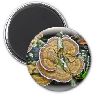 Purple Edge Shelf Fungus Coordinating Items 2 Inch Round Magnet