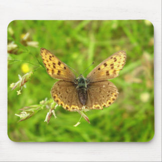 Purple Edged Copper Butterfly Mouse Mat