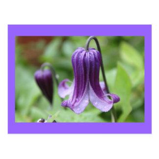 Purple Elegance Postcard