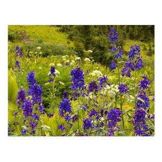 Purple Field Postcard