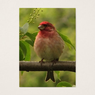 Purple Finch ATC Business Card