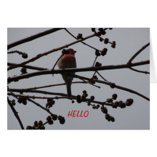 Purple Finch, Bright and Cheery Card