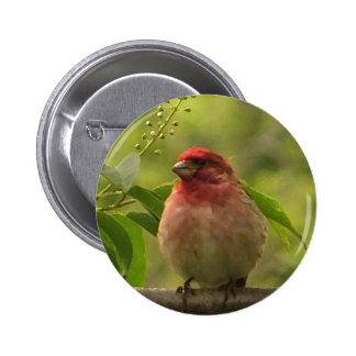 Purple Finch 2 Inch Round Button