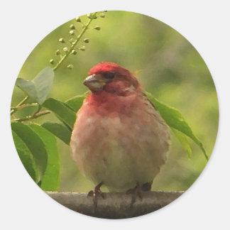 Purple Finch Classic Round Sticker