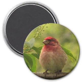 Purple Finch Fridge Magnet