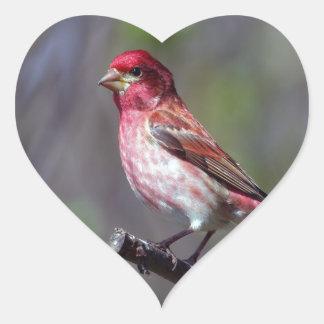 Purple Finch Heart Sticker