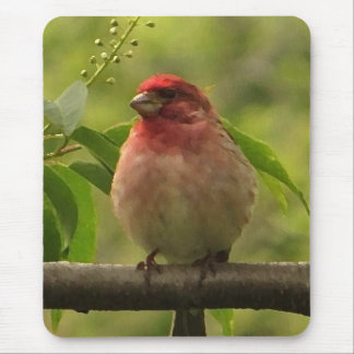 Purple Finch Mouse Pad