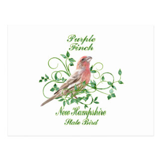 Purple Finch New Hampshire State Bird Postcard