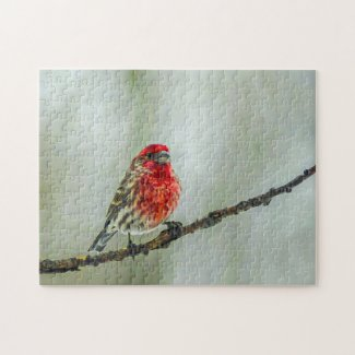 Purple Finch on a Tree Branch in Winter Red Bird Puzzle