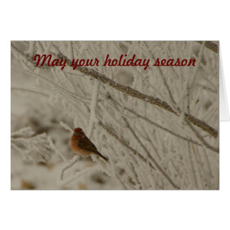 Purple Finch on Snowy Branches Holiday Card