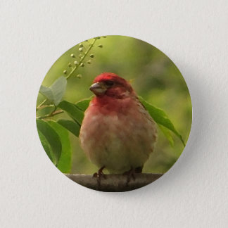 Purple Finch Pinback Button