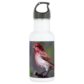 Purple Finch Stainless Steel Water Bottle