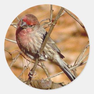 Purple Finch Sticker