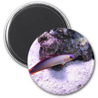 Purple Firefish 2 Inch Round Magnet