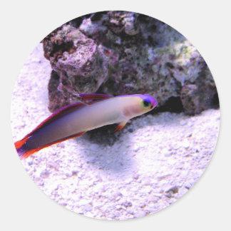 Purple Firefish Classic Round Sticker