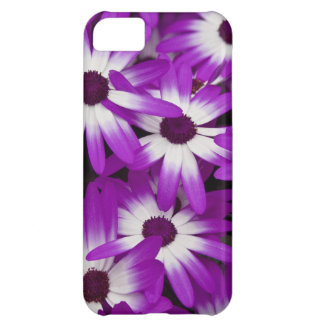 Purple Floral Hybrid Cineraria Cover For iPhone 5C