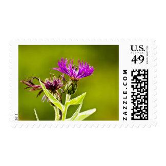 Purple Floral Stamp