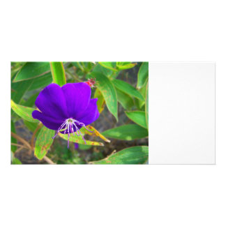 purple flower against green plant design customized photo card
