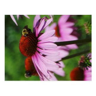 purple flower bee postcard
