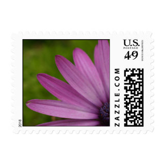 Purple flower blossom up close macro photography stamp